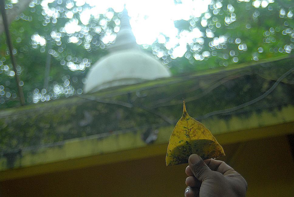 Budha tree u Budhova chrámu na Srí Lance - boat trip