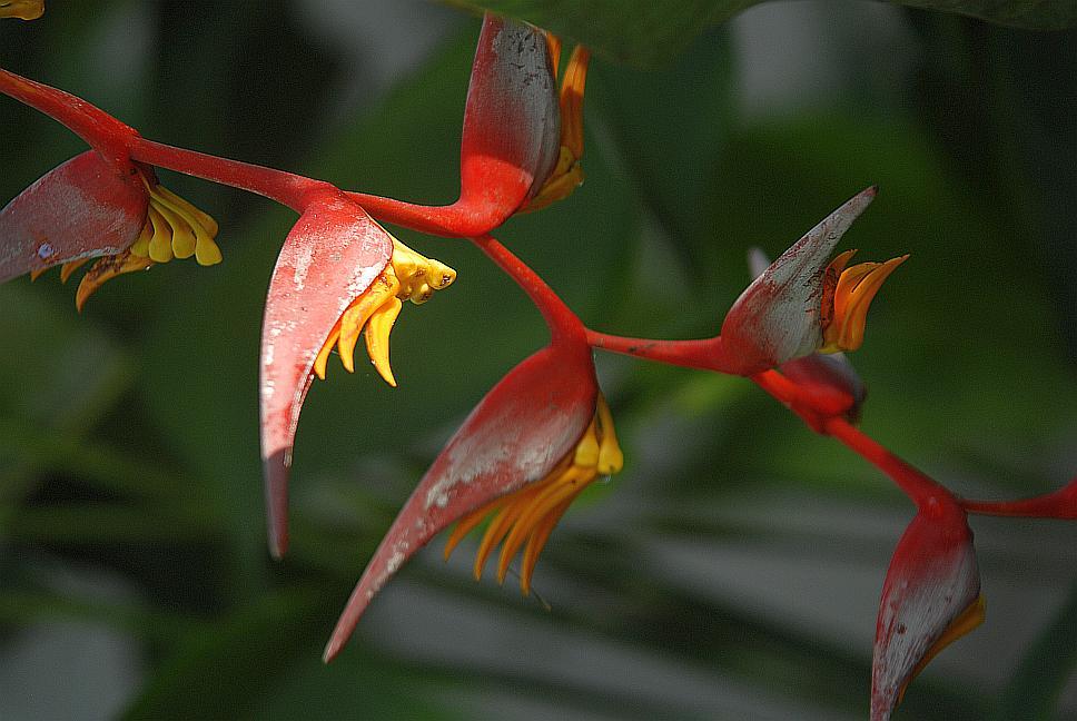 flora-sri-lanka-2