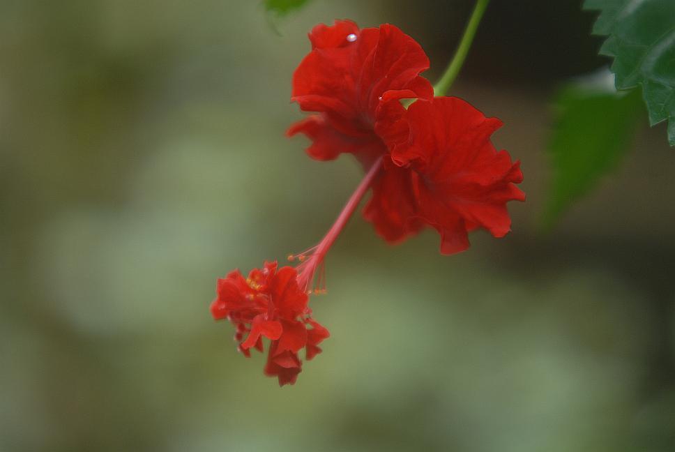 flora-sri-lanka-5