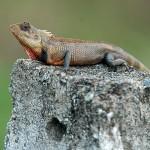 Fauna a flóra na Srí Lance