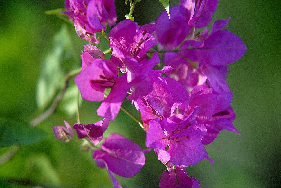 mistni-flora-sri-lanka