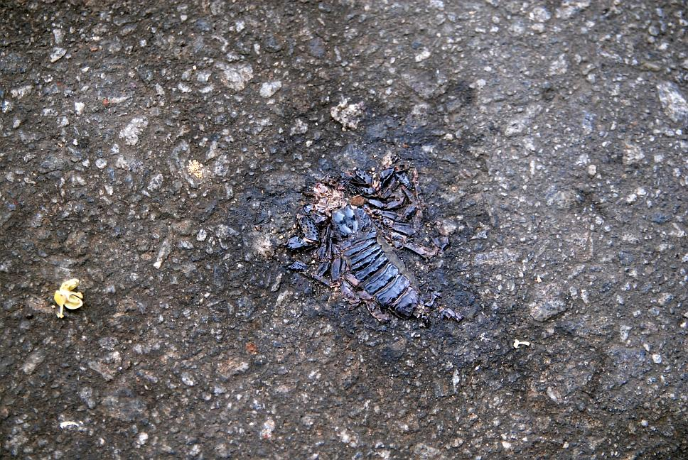 prejety-skorpion