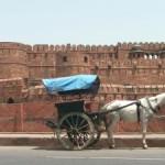 Zvířata a příroda v Indii
