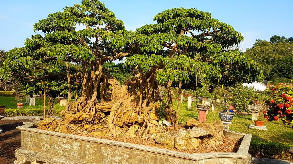 Zahrada bonsají